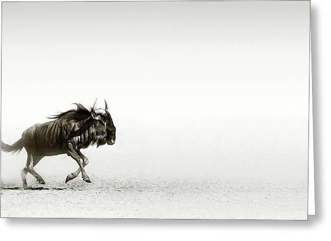 Blue Wildebeest In Desert Greeting Card