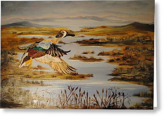 Blue Winged Teal Greeting Card by James Higgins