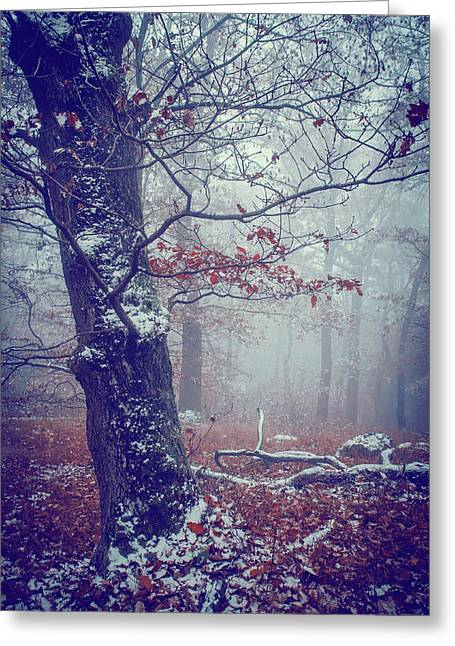 Blue Woods. Mysterious  Greeting Card by Jenny Rainbow