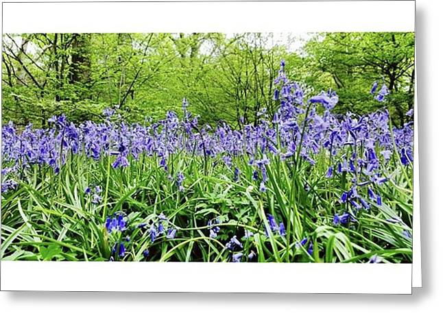 #bluebell #flowers #spring  #woodland Greeting Card by Natalie Anne