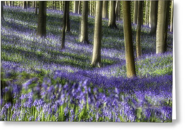 Bluebell Forest Color Explosion Greeting Card by Dirk Ercken