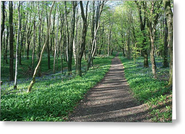 Bluebell Forest Greeting Card