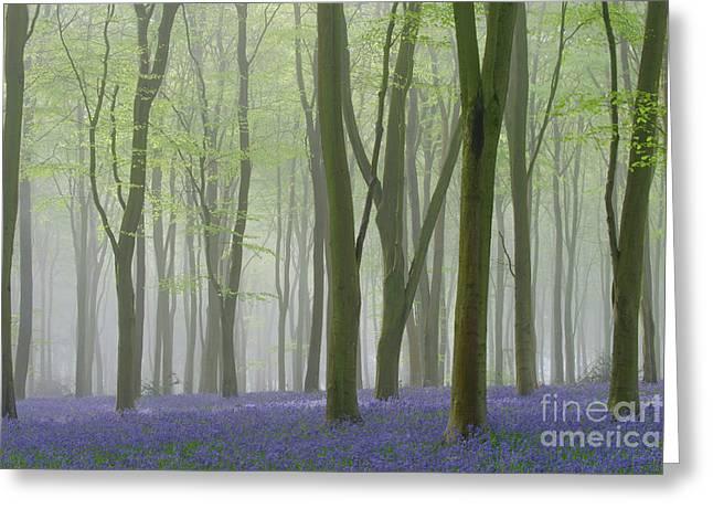 Bluebell Mist Iv Greeting Card