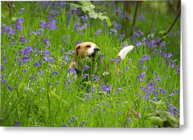 Bluebell Penny Greeting Card