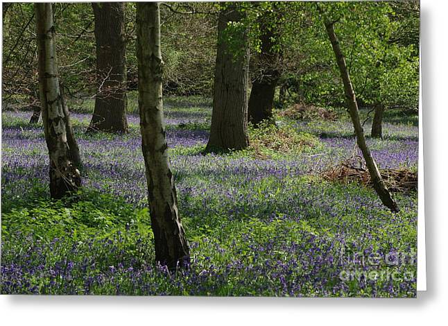 Bluebell Woods Greeting Card by Catja Pafort