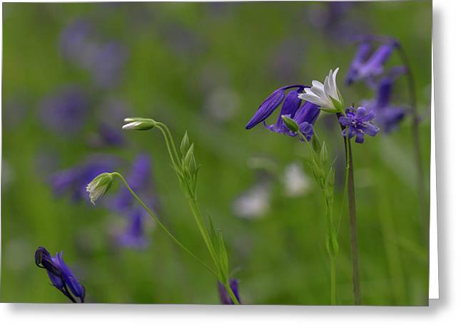 Bluebells And Stitchwort  Greeting Card