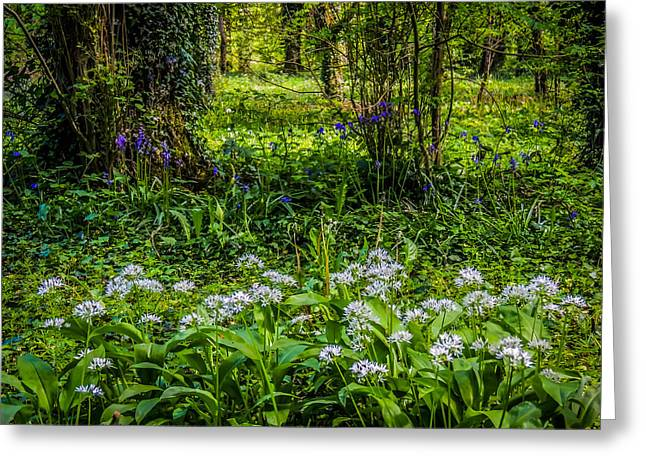 Bluebells And Wild Garlic At Coole Park Greeting Card