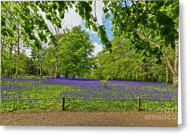Bluebells At Enys Greeting Card by Terri Waters