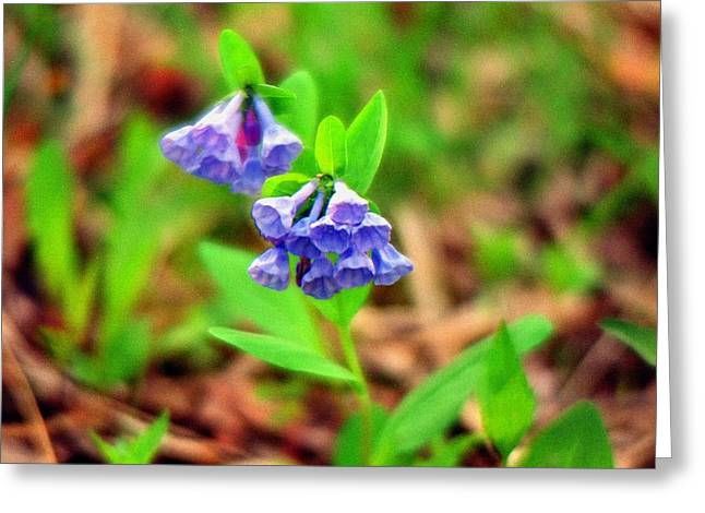 Bluebells Greeting Card by C E McConnell