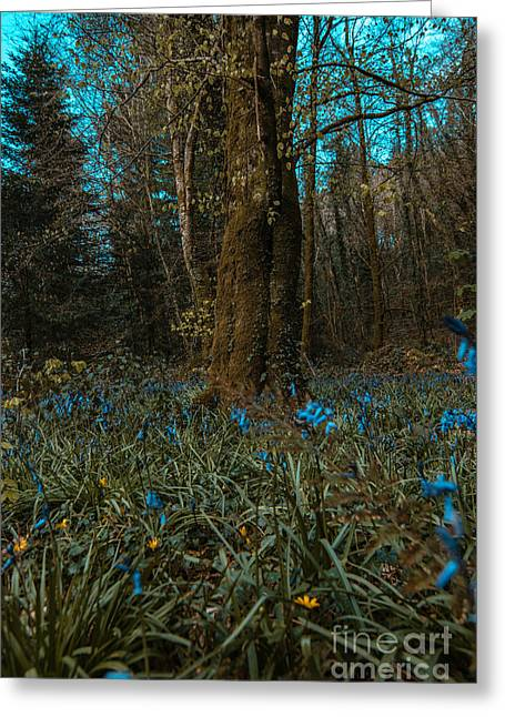 Bluebells In Lismore Forest 2 Greeting Card
