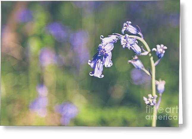 Bluebells - Natalie Kinnear Photography Greeting Card