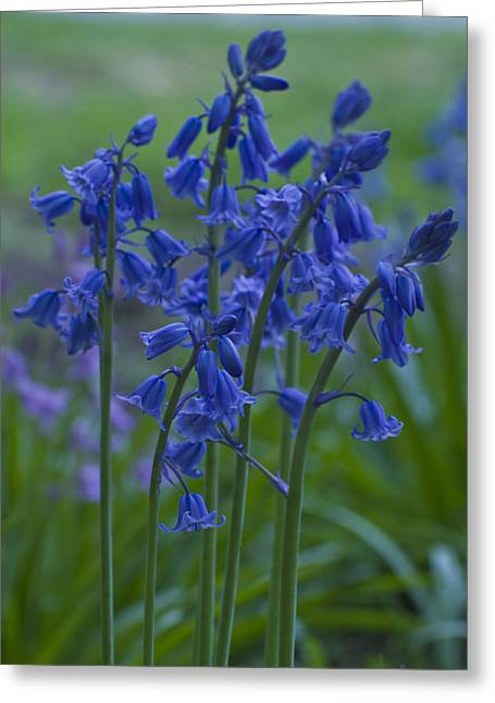 Bluebells Greeting Card by Rob Hemphill