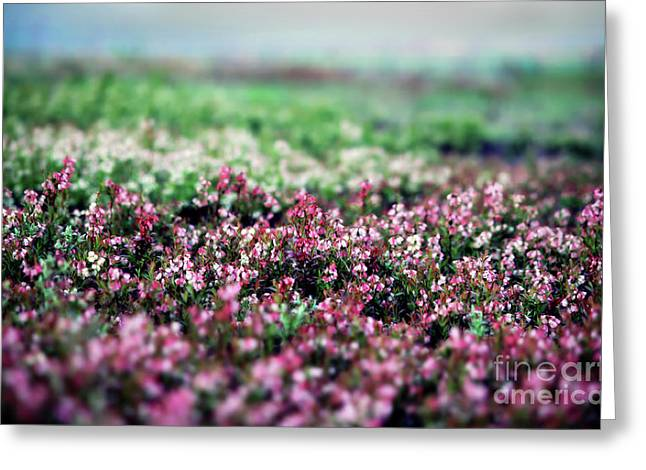 Greeting Card featuring the photograph Blueberry Blossoms  by Alana Ranney