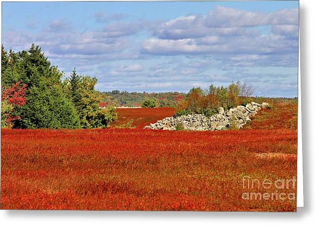Blueberry Field Greeting Card