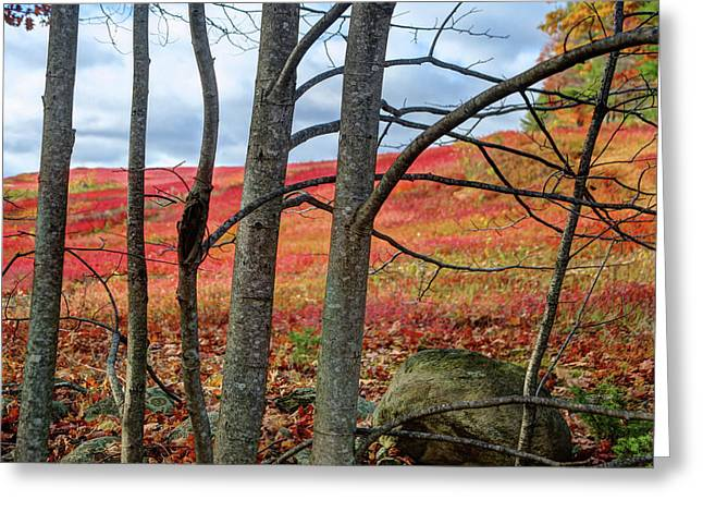 Blueberry Field Through The Wall - Cropped Greeting Card