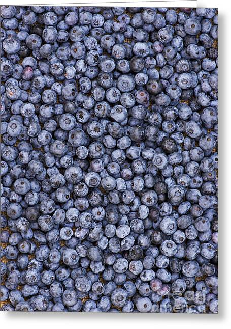 Blueberry Harvest Greeting Card by Tim Gainey