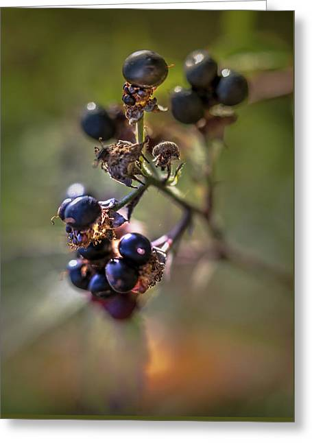 Blueberry Nr.1 Greeting Card