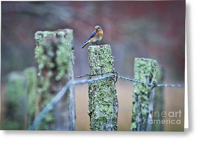 Greeting Card featuring the photograph Bluebird 040517 by Douglas Stucky