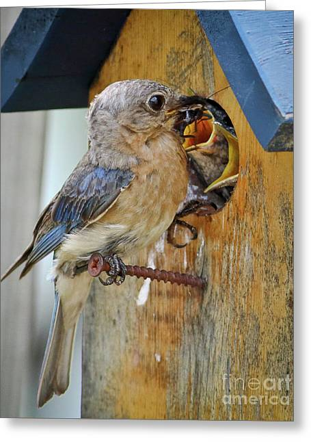 Greeting Card featuring the photograph Bluebird 072616 by Douglas Stucky