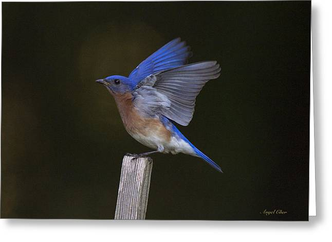 Bluebird  Greeting Card by Angel Cher