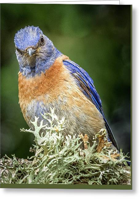 Bluebird Attitude Greeting Card