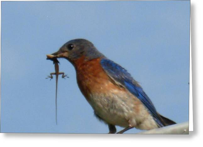 Greeting Card featuring the photograph Bluebird Bringing Home Lunch by Jeanne Kay Juhos