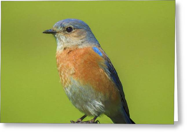 Bluebird Digital Art Greeting Card