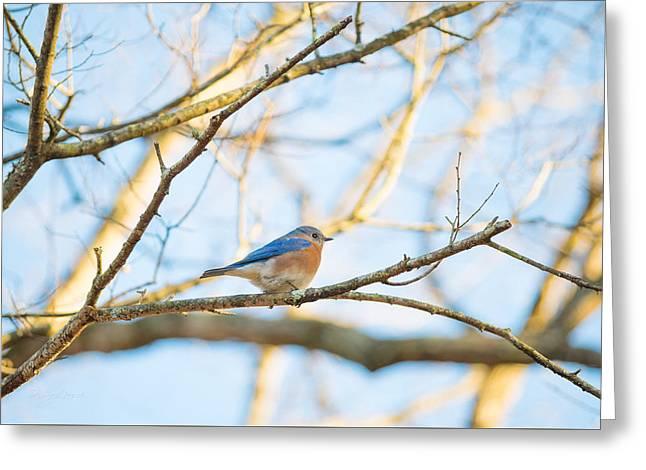 Bluebird In Tree Greeting Card