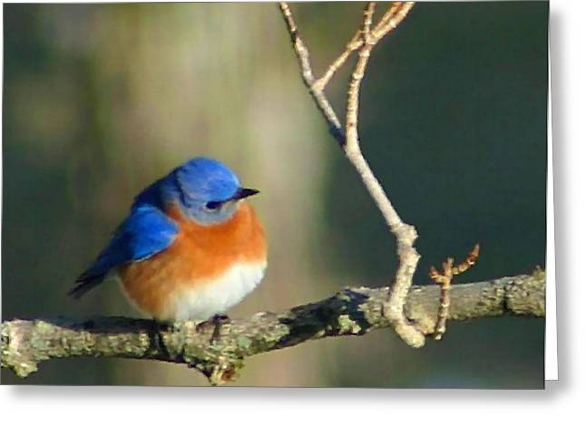 Chubby Greeting Cards - Bluebird Greeting Card by Kristin Elmquist