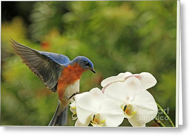 Bluebird Landing On Orchid Greeting Card