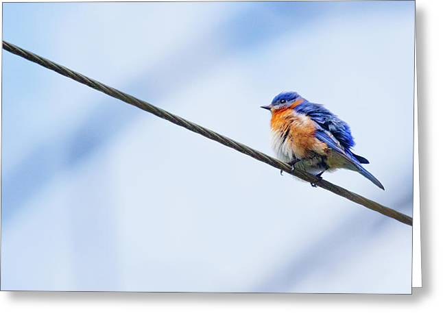 Greeting Card featuring the photograph Bluebird Of Happiness by Linda Unger