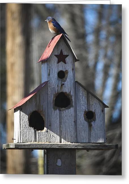 Thrush Greeting Cards - Bluebird on Birdhouse Greeting Card by Teresa Mucha