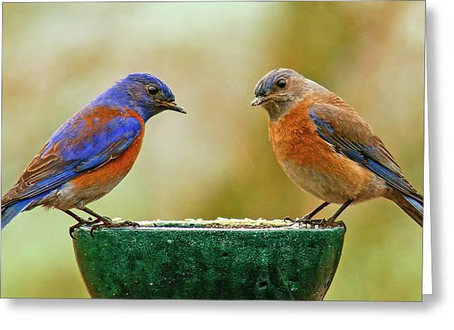 Bluebird Pair Greeting Card by Jean Noren