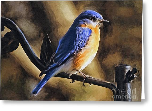Bluebird Portrait Greeting Card by Sue Melvin