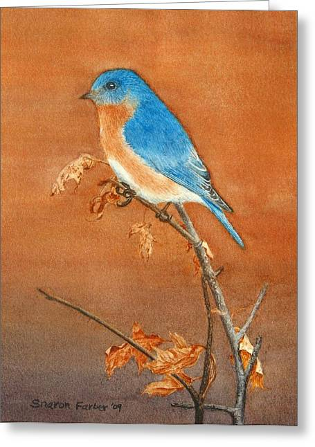 Bluebird Greeting Card by Sharon Farber