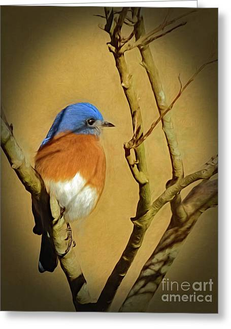 Bluebird Waiting For Spring Greeting Card