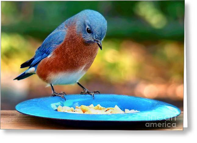 Greeting Card featuring the photograph Bluebird's Dinner by Sue Melvin