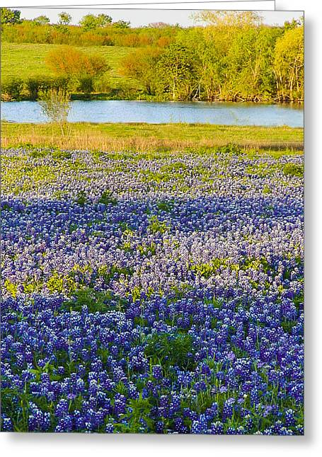 Bluebonnet Field Greeting Card