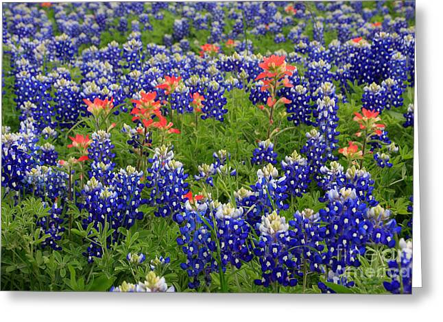 Bluebonnet Indian Painbrush Greeting Card by Jerry Bunger