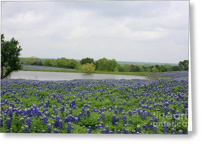 Bluebonnet Lake Greeting Card