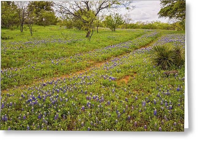 Bluebonnet Road - Texas Hill Country Greeting Card by Brian Harig