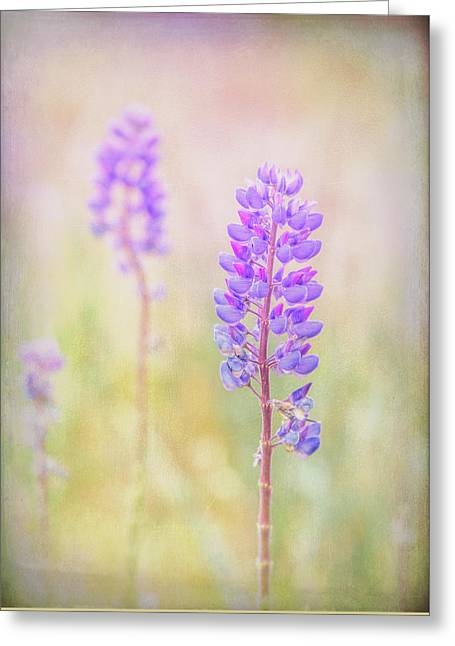 Greeting Card featuring the photograph Bluebonnet by Russell Styles