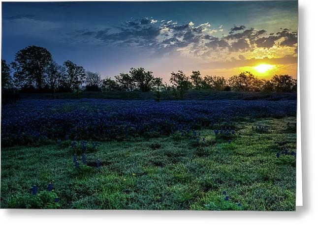 Bluebonnet Sunrise Greeting Card by Mark Alder