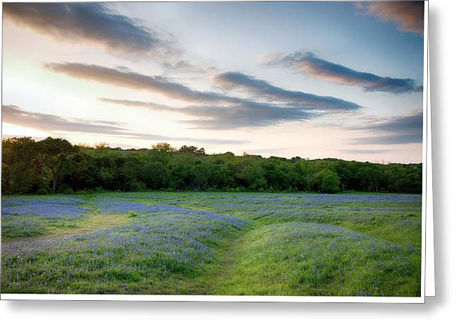 Bluebonnet Trail Ennis Texas 2015 V5 Greeting Card