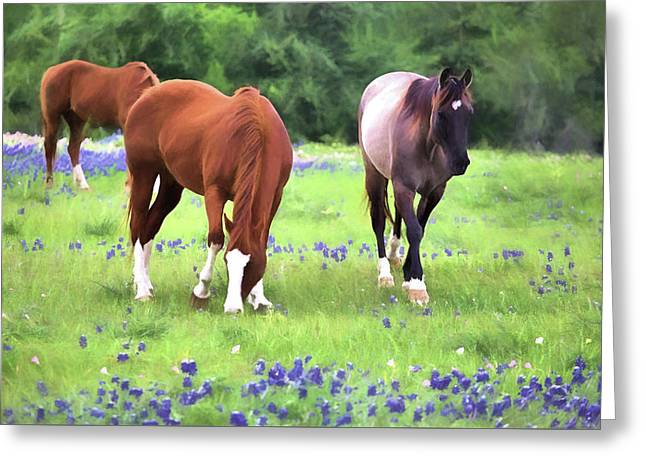 Bluebonnets And Horses Greeting Card by JC Findley