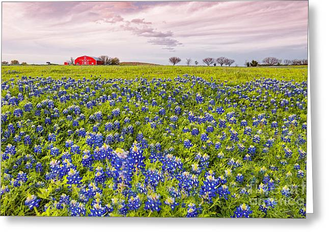 Bluebonnets And Red Barn In Washington County - Chappell Hill - Brenham - Texas Greeting Card