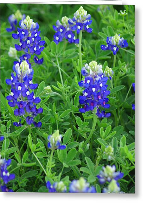 Bluebonnets II Greeting Card