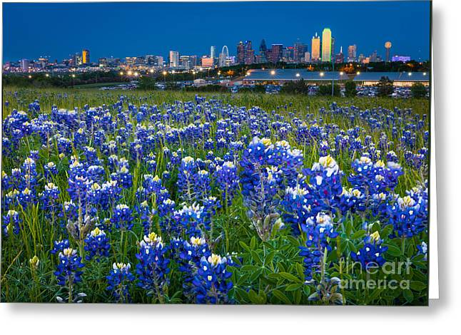 Bluebonnets In Dallas Greeting Card by Inge Johnsson