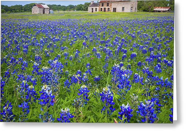 Bluebonnets In Marble Falls Greeting Card
