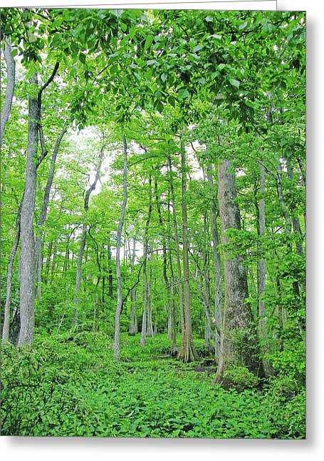 Blueboonet Swamp Baton Rouge La Greeting Card